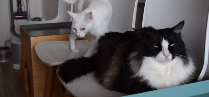 Animal Cafes In Singapore