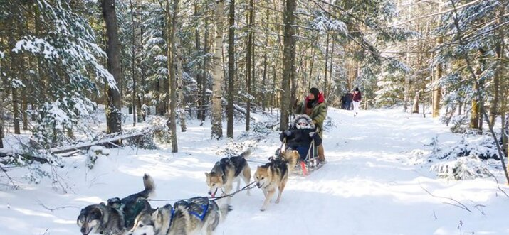 things to do in winter in toronto