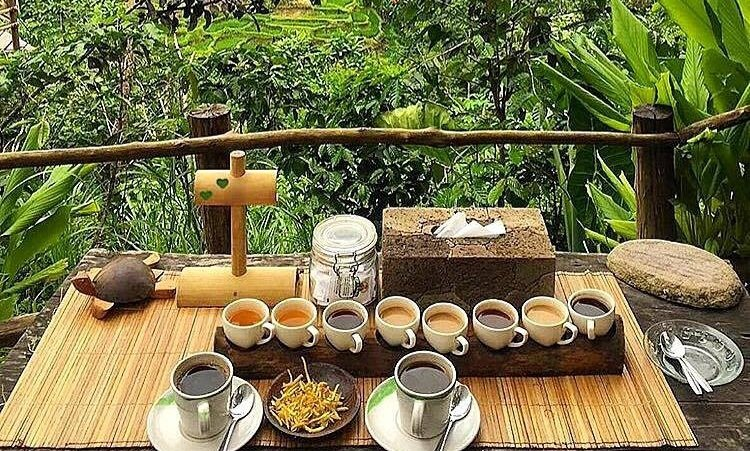 Civet And Luwak Coffee Revealed At Bali Pulina Trip101